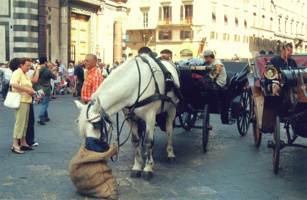 Horse-drawn carriage in Florence, Italy