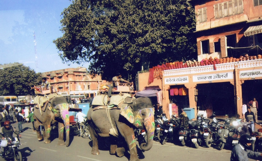 Elephants are used as transport vehicles in Jaipur, India
