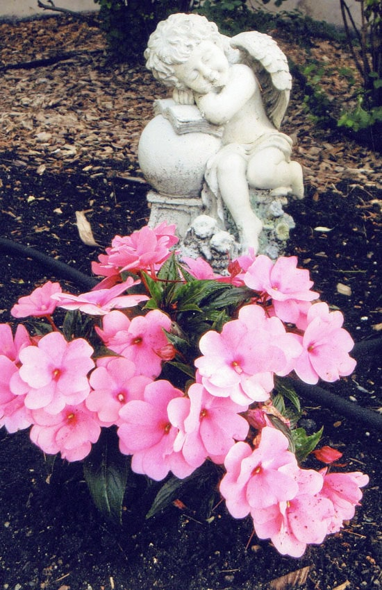 Flowers and angel statue