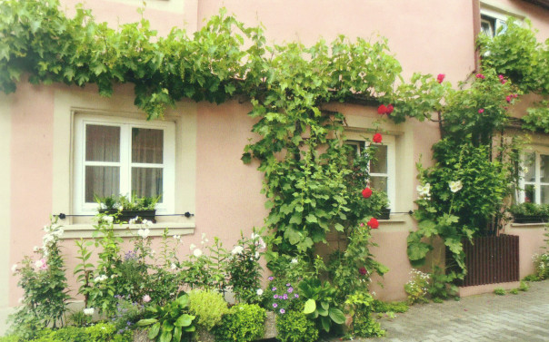 Rothenburg-home-with-vines