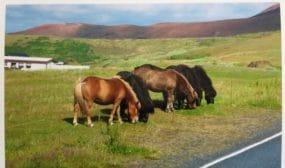 Frank Mercy takes Ian back to his family's horse farm in Wisconsin, USA.